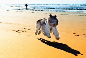 Partir avec son animal en vacances